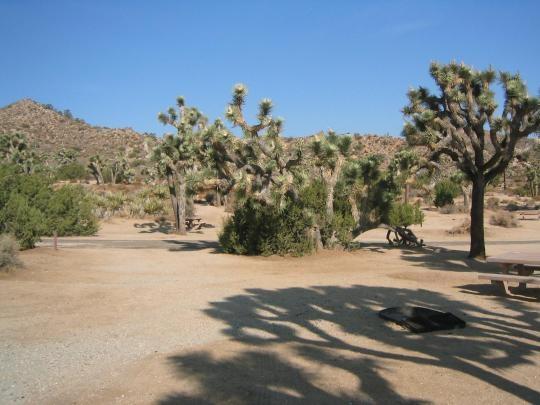 Joshua Tree National Park Black Rock Campground, Yucca ...