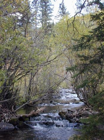 Santa Fe National Forest Holy Ghost Campground Pecos Nm