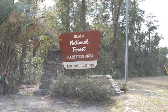 Ocala National Forest Alexander Springs Campground