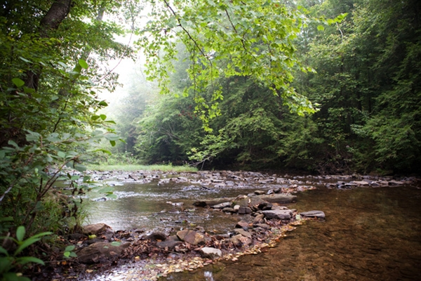 Daniel Boone National Forest Great Meadows Campground Stearns Ky Gps Campsites Rates Photos Reviews Amenities Activities Policies And