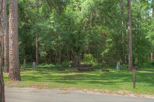 Highlands Hammock State Park Sebring Fl Gps Campsites