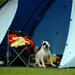 A dog sitting in front of a tent
