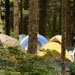 Tents set up between trees