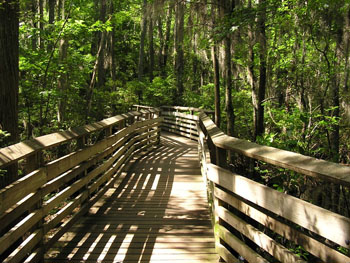 Bald Cypress Trail, First Landing State Park