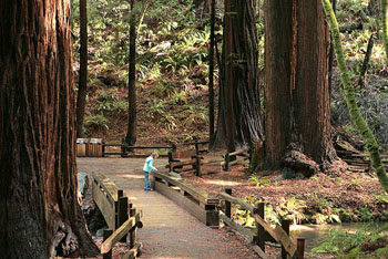 Child on trail in Muir Woods National Monument