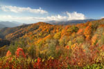 Yellow, red, green fall foliage at Great Smoky Mountains National Park