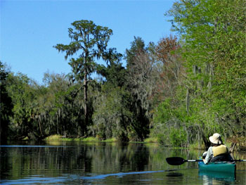 Canoeing at Alafia River State Park