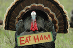 Turkey with an Eat Ham sign hanging from its neck