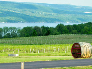 View of the vineyards and Seneca lake from Glenora Wine Cellar