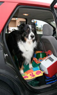 Merlin in the backseat of the Merlinmobile with all of his necessities.