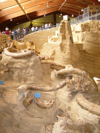 Mammoth bones being excavated at Mammoth Site, Hot Springs, SD