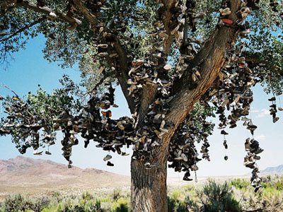 Shoe Tree in Nevada filled with shoes hanging from the branches