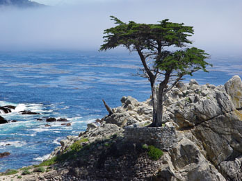 Lone Cypress, 17-mile Drive, Pebble Beach, CA
