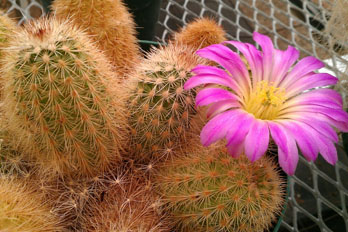Cactus at Chihuahuan Desert Nature Center