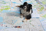 Merlin sitting amidst a pile of maps