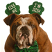 Dog in shamrock costume