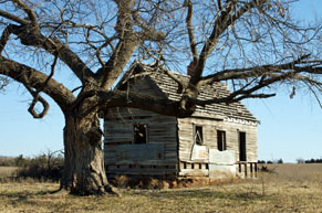 Old wooden house with tree on prairie